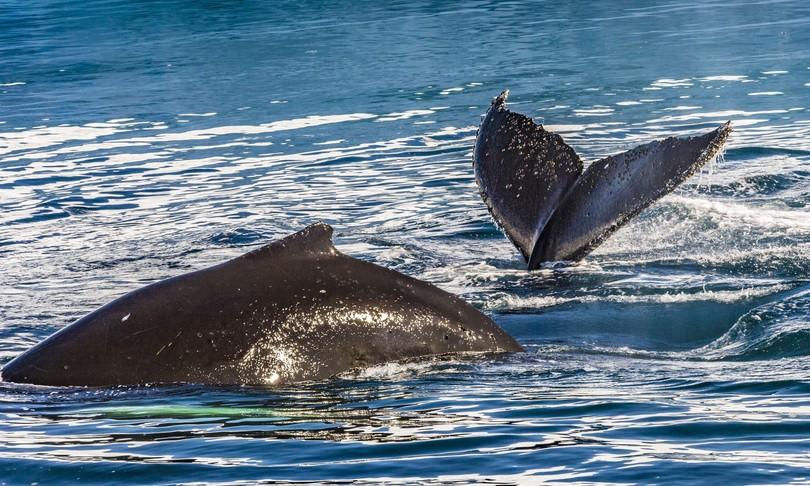 abbraccio balene