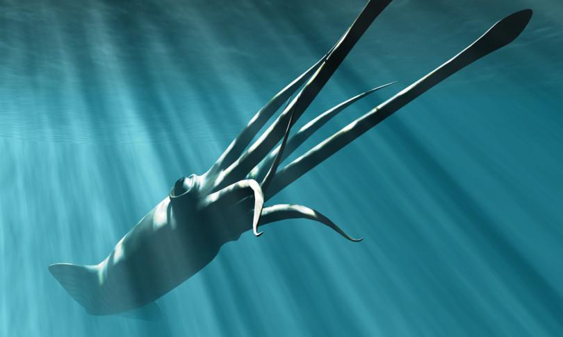 video calamaro gigante caccia meduse