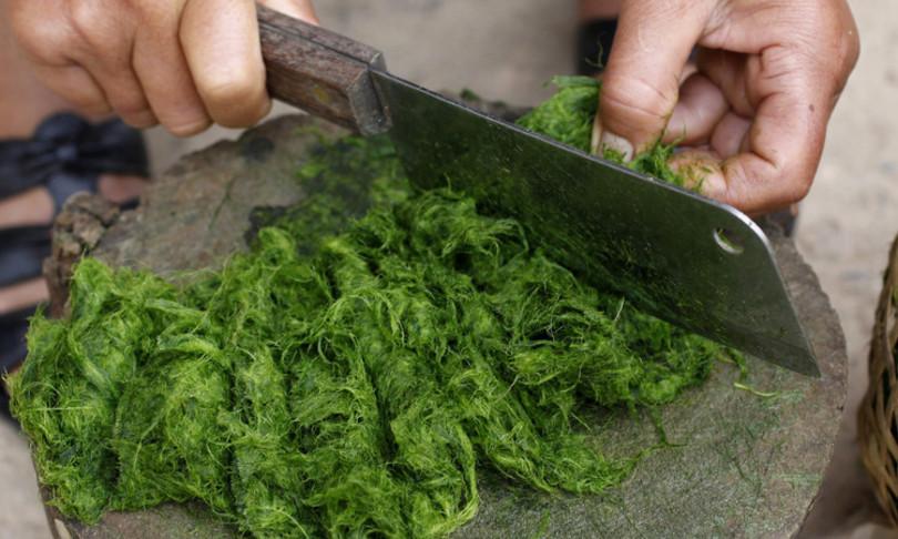 alghe verbi micoproteine cibo futuro