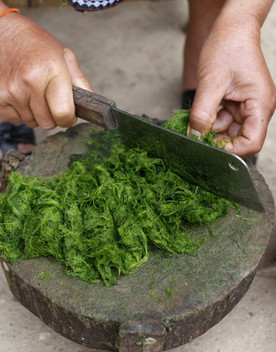 Alghe, vermi emicoproteinesono il cibo del futuro
