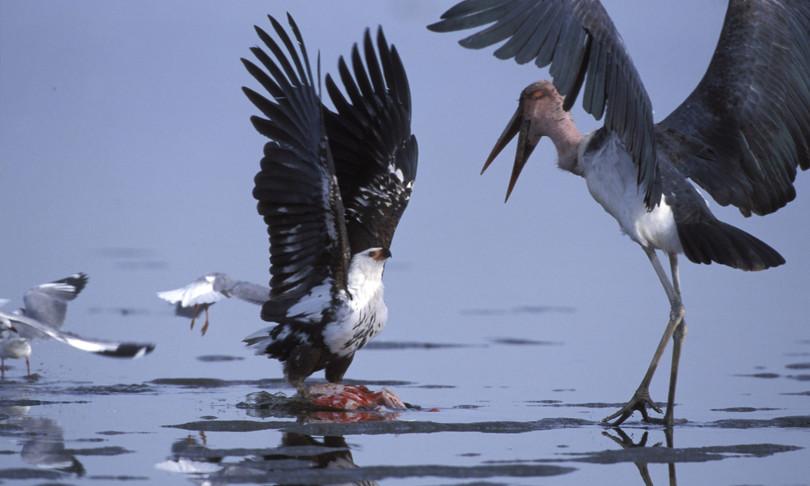 Sulla Terra ci sono più di 50 miliardi di uccelli