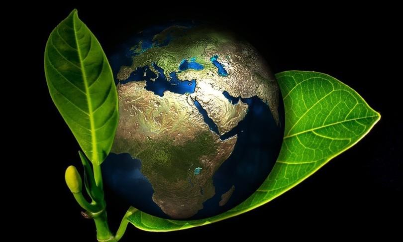Scienza vegetazione pianeta mutamento veloce 10.000 anni