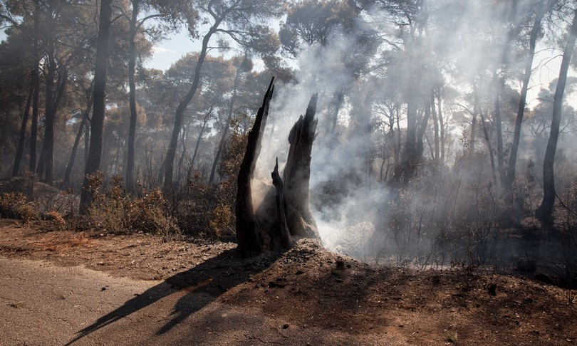 incendio atene pineta geraneia