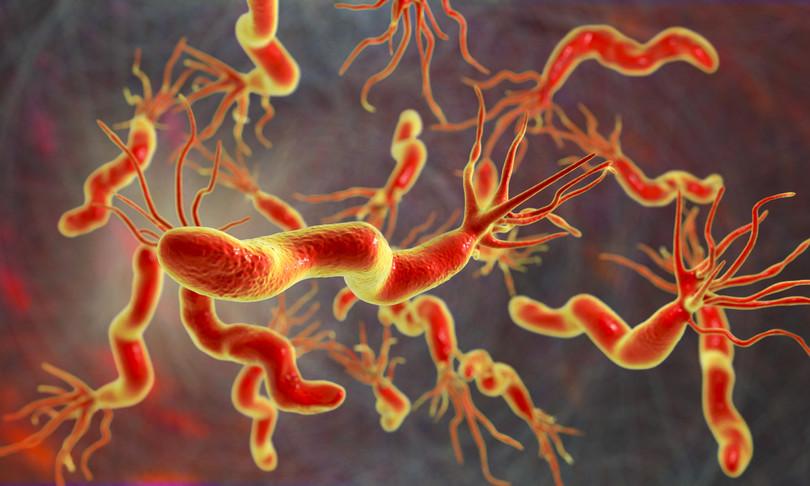 batteri diversi ognicittaimpronta microbiomica