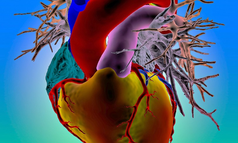 Creato mini-cuore batte fino 100 volte minuto