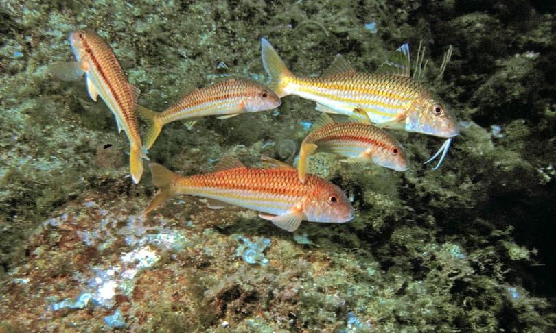 ambiente trentuno santuari marini per biodiversita