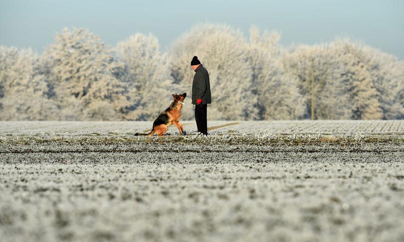 Alzheimer Università Parma cane isolamento