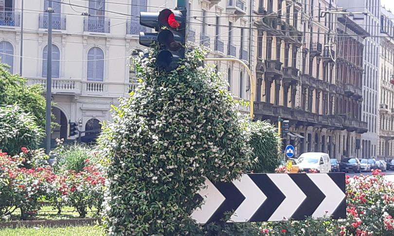 semaforo gelsomino Milano