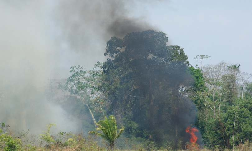 Migliaia di ulivi sono andati in fiamme nel Salento