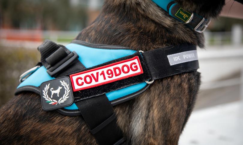 Ieo cani anti-Covid asintomatici