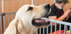 Il cervello dei cani si è evoluto per interagire con l'uomo