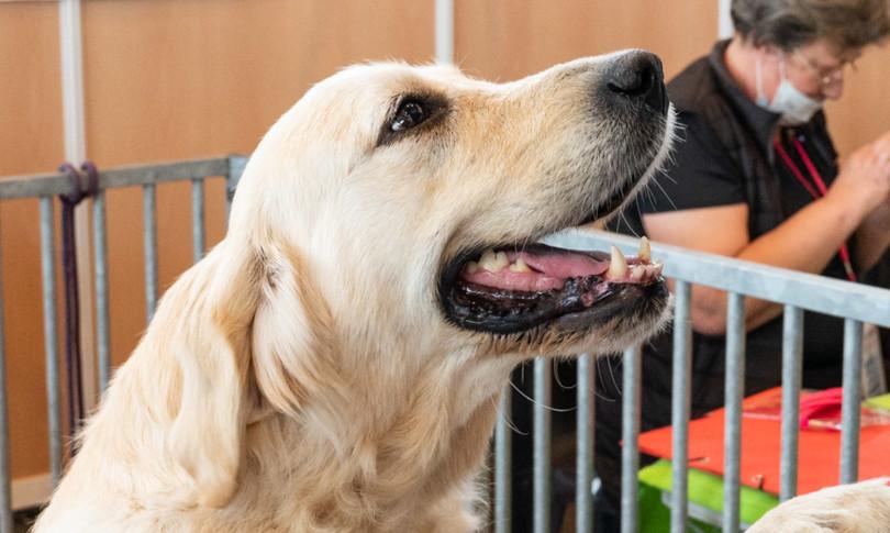 cervello cani evoluto interagire uomo