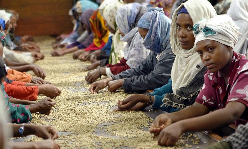 etiopia record esportazioni caffe