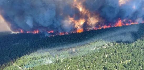 In tutto il mondo le foreste stanno bruciando