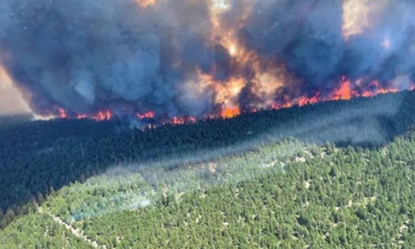 clima bruciano foreste tutto mondo