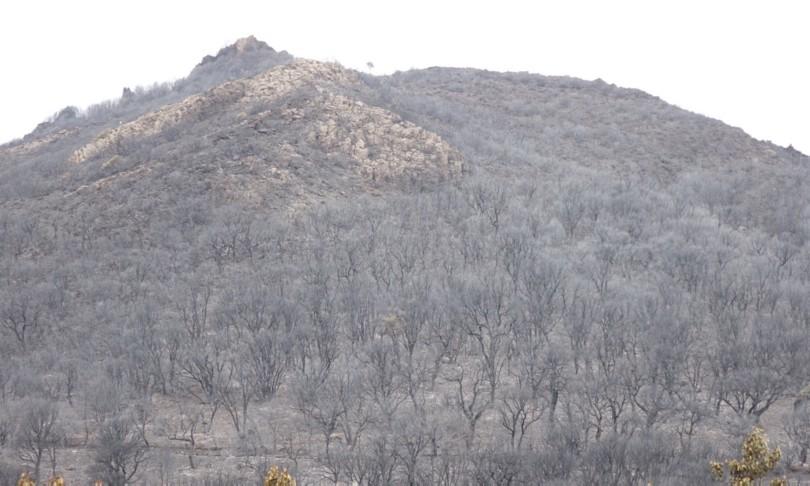 Incendi Sardegna danni Oristanese
