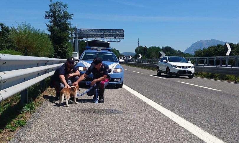 Poliziotto incidenti stradali Nuorese Sardegna
