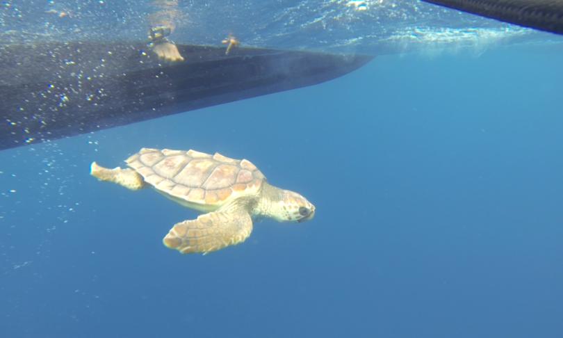 anno cure tartaruga nena tornata mare