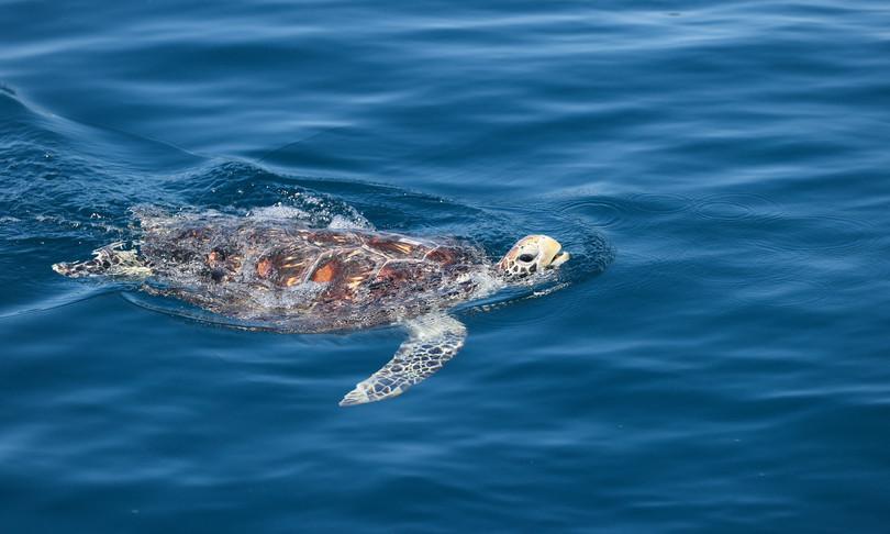 inquinamento plastico vera minaccia tartarughe mare