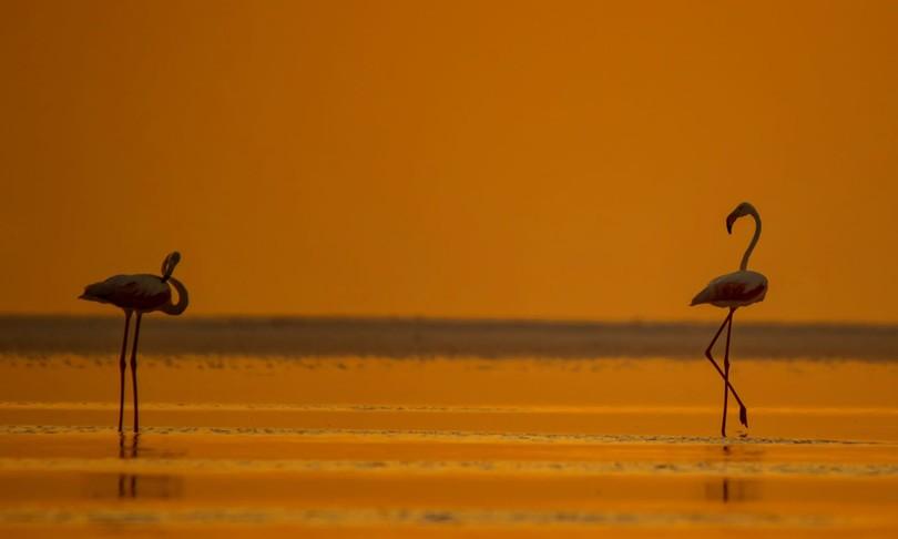 strage di fenicotteri lago salato turchia