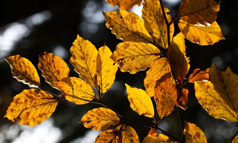 foreste vetuste aspromonte minacciate incendi aspromonte
