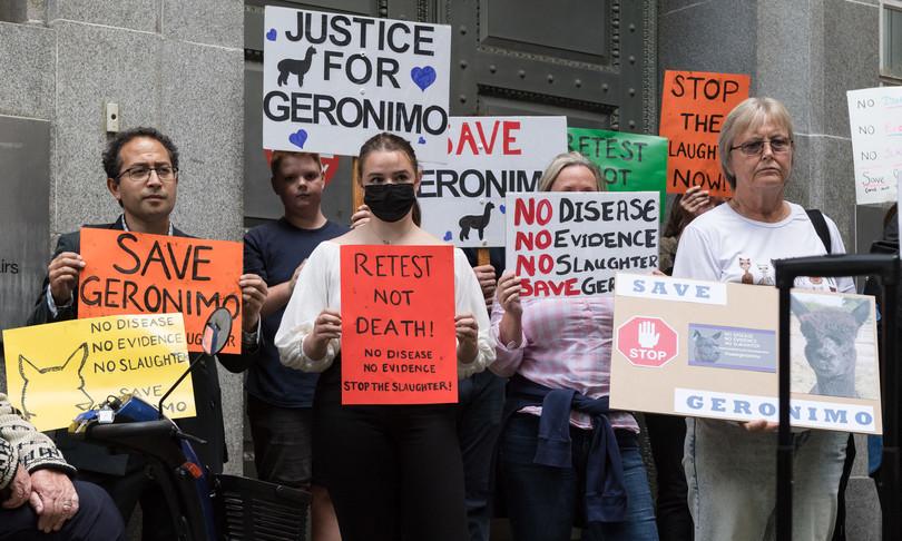 Corteo Downing Street salvare alpaca Geronimo
