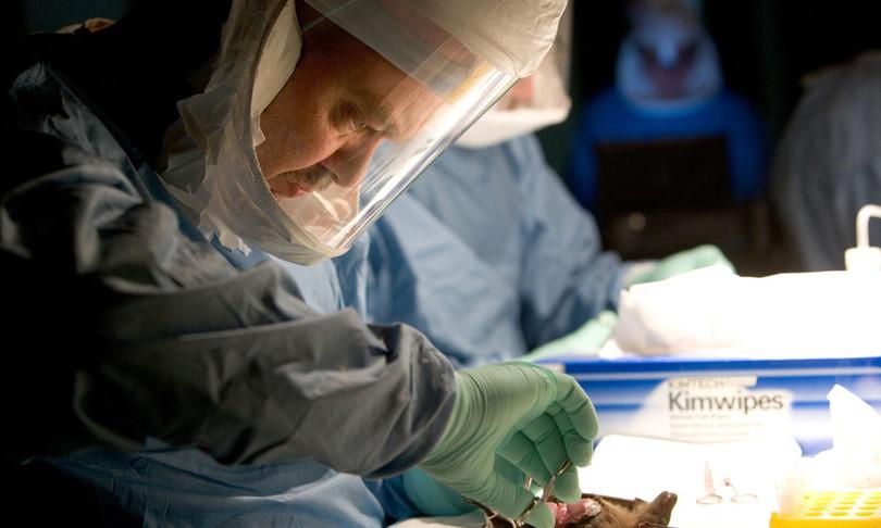 primo caso contagio virus marburg