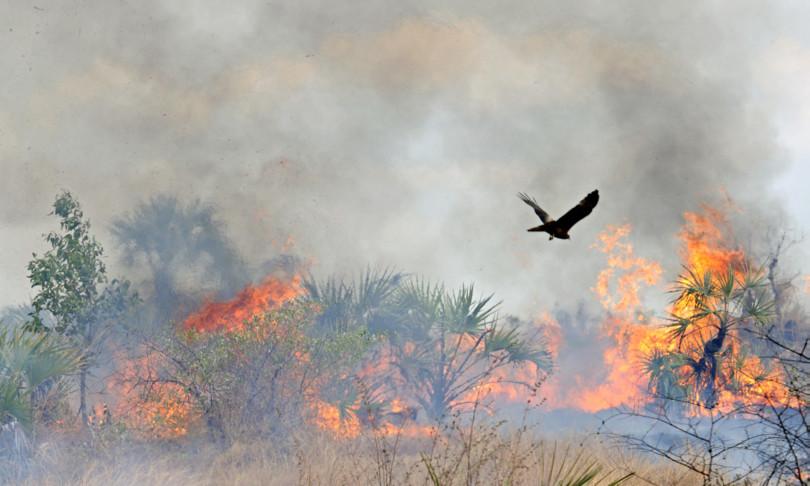 Incendi Wwf danni incalcolabili fauna flora
