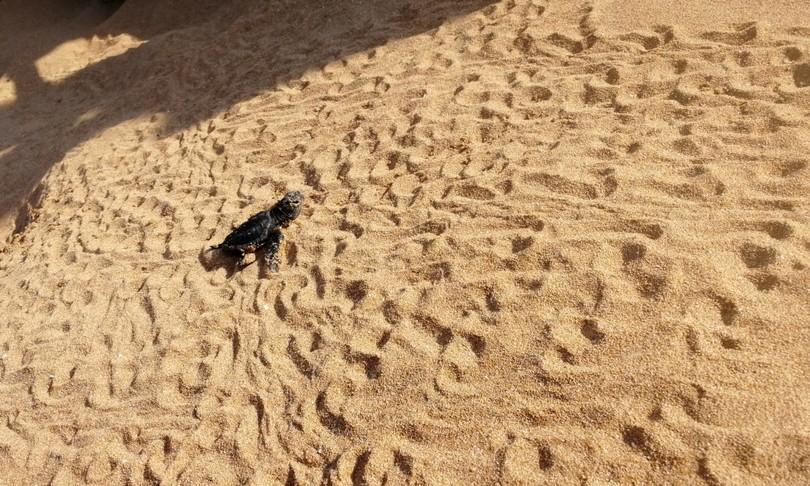 tartarughe nate tra siracusa e ragusa