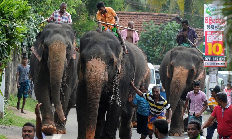sri lanka elefanti guida stato ebbrezza