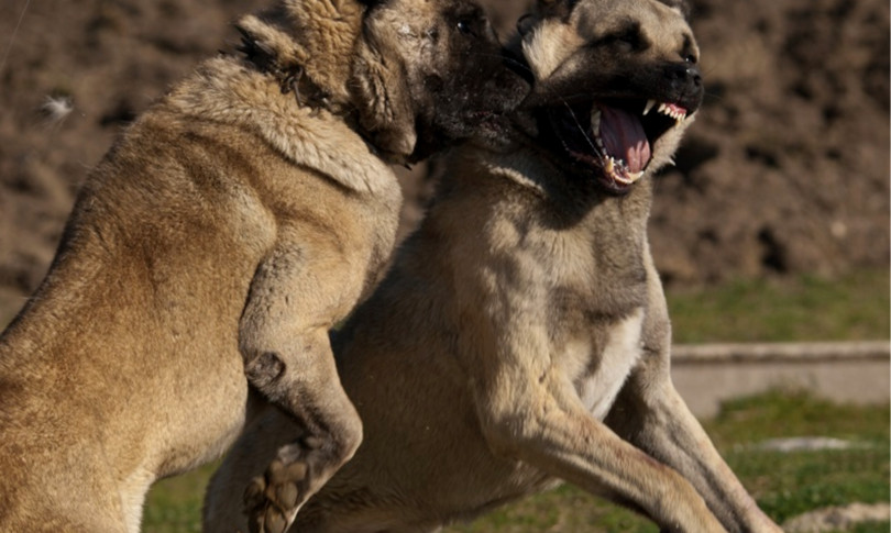 Ragazzasbranata cani Calabria