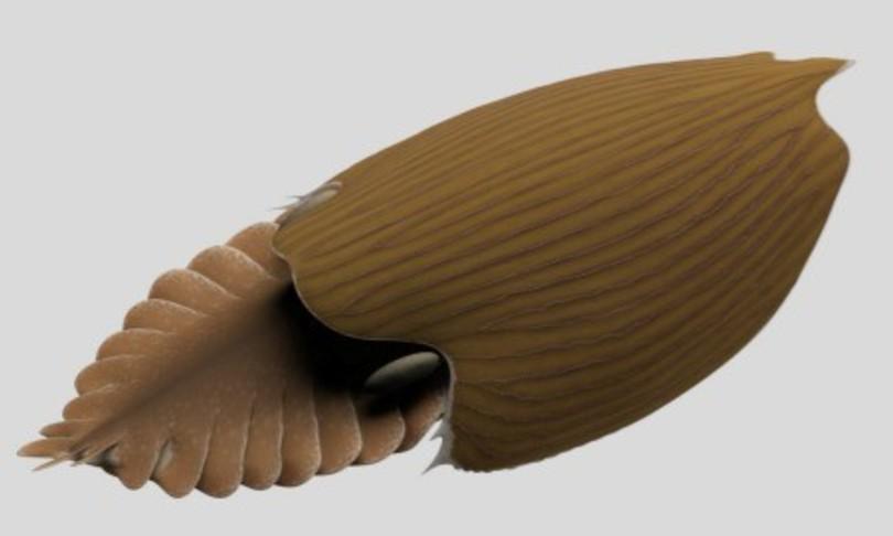nuovo artropode fossile lungo fino a mezzo metro cambriano
