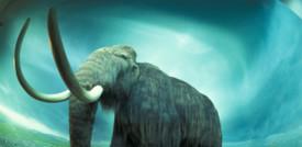 Raccolti 15 milioni di dollari per creare un ibrido elefante-mammut