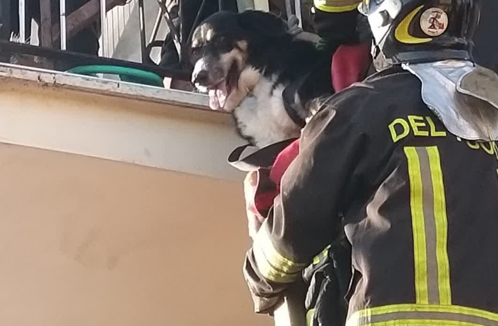 Il salvataggio di un cane da uno degli appartamenti della palazzina distrutta da un'esplosione a Roma