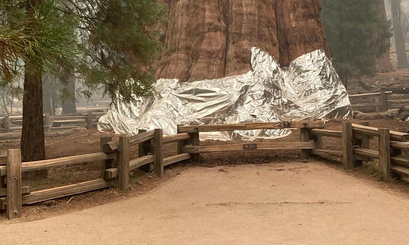 sequoie americane avvolte teli ignifughi paura incendi