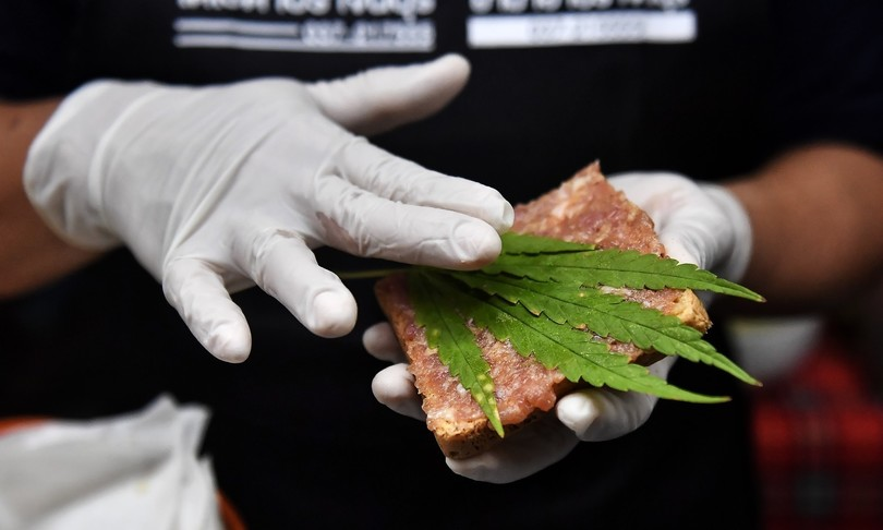 cannabis raggiunte 500 mila firme referendum
