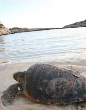 Boom di nascite di tartaughe marine a Lampedusa