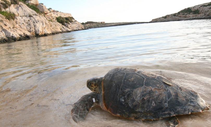 lampedusa prolifica per tartarughe marine