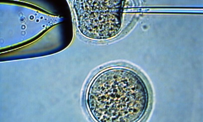 scienza cellule staminali tessuto cartilagineo cartilagine