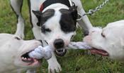 Sono inserite nell'elenco delle specie considerate 'di difficile gestione' che potrebbero necessitare particolari accorgimenti prima dell'adozione