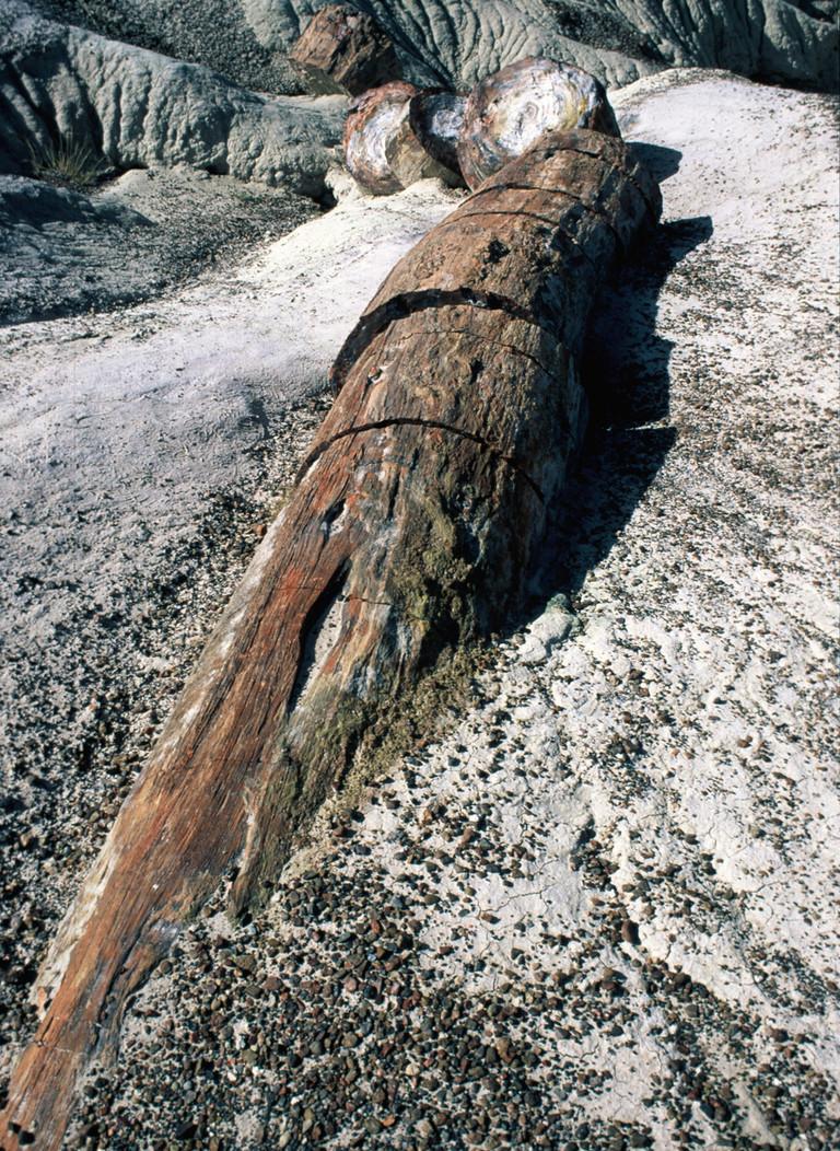 Ritrovato in Brasile legno fossile 280 milioni anni fa