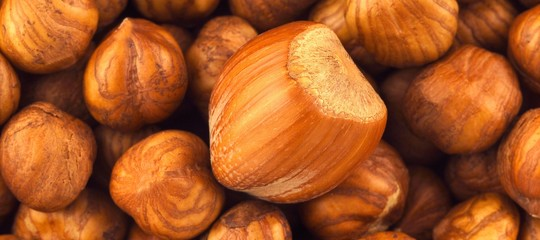 "Turkey: Italian Ferrero, ""the best country in hazelnut exports"""